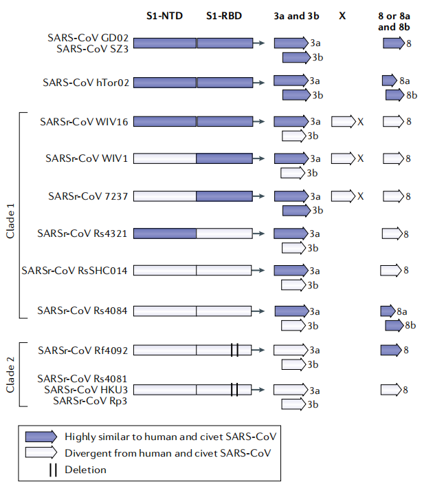The sequence diversity of coronaviruses
