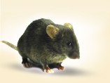 TurboKnockout<sup>&reg;</sup> Gene Targeting Mice