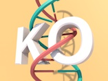KO-First: A Tool for Studying Gene Function Across the Mammalian Genome