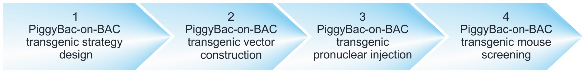 workflow of PiggyBac-on-BAC transgenic mouse projects