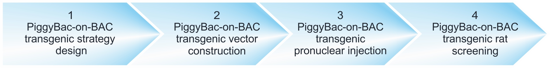 workflow of PiggyBac-on-BAC transgenic rat projects