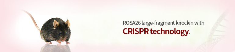 rosa26 knockin with crispr technology