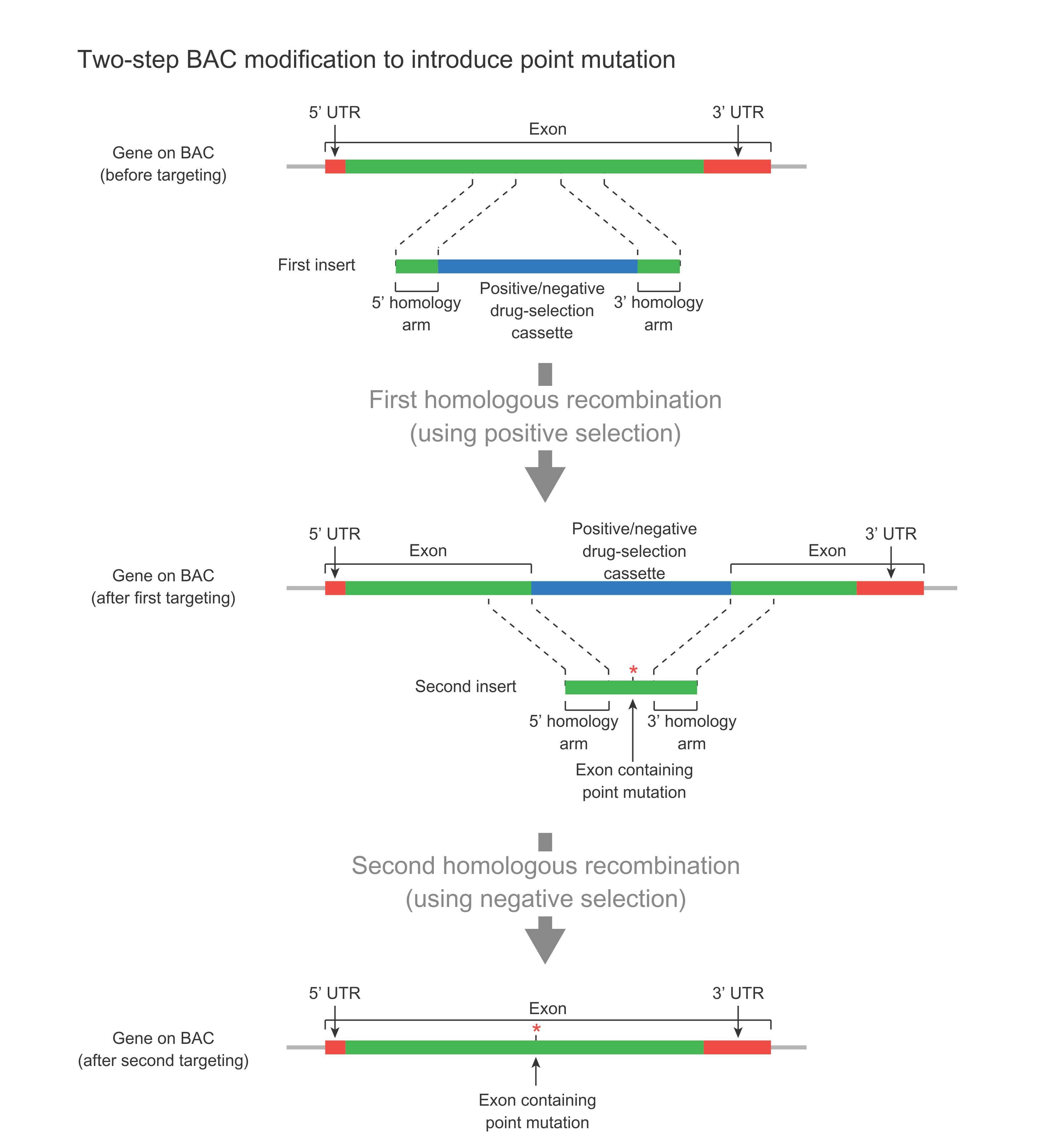 Custom BAC Modification Services
