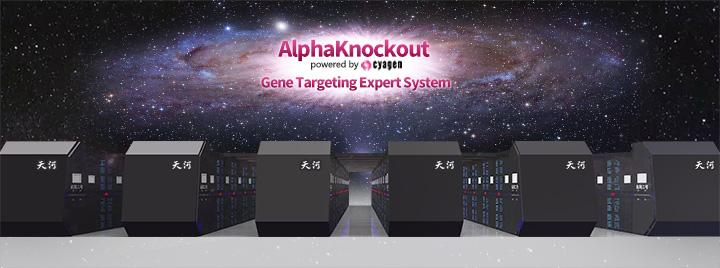 基因打靶专家系统