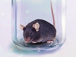 Treatment and Male-Bias in Autistic Mice