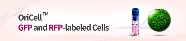 Fluorescent-Labeled Cells