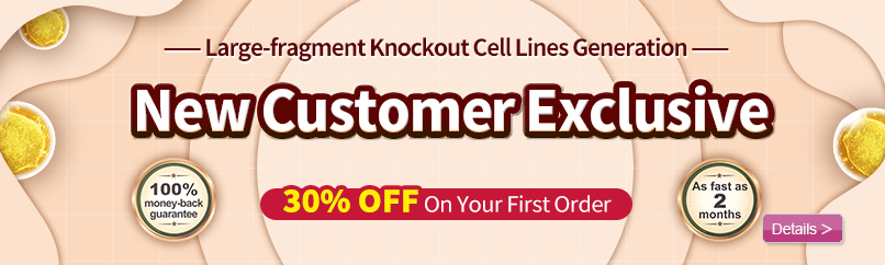 Knockout Cell line generation