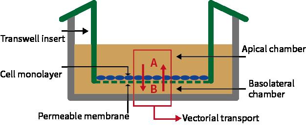 Transwell实验图