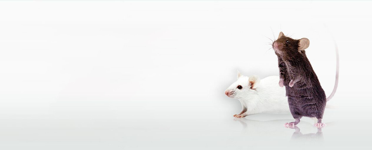 PiggyBac Transgenic