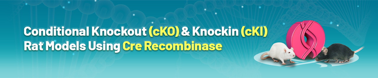 Conditional Knockout & Knockin Rat Models Using Cre/Lox | Cyagen US Inc.